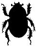 silhouette of dor or Geotrupes stercorarius