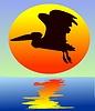 Pelican | Stock Vector Graphics