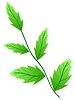 Vector clipart: Decorative leaf