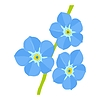 Forget-me-not | Stock Vector Graphics