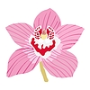 Векторный клипарт: Орхидея