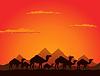 Векторный клипарт: Верблюды