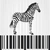 Векторный клипарт: зебра