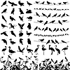 Vector clipart: Silhouette of birds