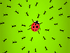 Vector clipart: Hunting of ants