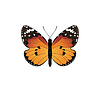 Vector clipart: orange butterfly