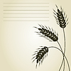 Vector clipart: Wheat