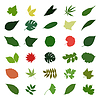 Vector clipart: leaf