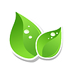 Vector clipart: leaves with water drops