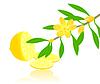 Vector clipart: Citron paradise