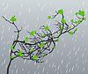 Vector clipart: Rain
