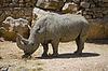 아프리카 코뿔소 | Stock Foto