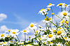 White daisies in sky | Stock Foto