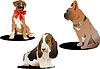 Vektor Cliparts: Drei nette Hunde.