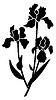 Vector clipart: iris black