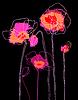Rosa Mohnblumen auf schwarzem Hintergrund | Stock Vektrografik