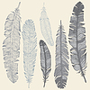 Set Feather | Stock Vector Graphics