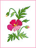 Vector clipart: Card with beautiful flower