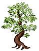 Vector clipart: Ficus Bonsai