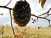 Honeycomb | Stock Foto