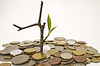Coins and plant | Stock Foto