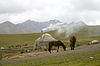 Pferde in Bergen | Stock Foto