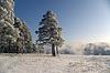 Winter-Szene | Stock Foto