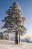 ID 3302668 | Snowy winter tree | High resolution stock photo | CLIPARTO