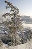 ID 3302669   Snowy winter tree   High resolution stock photo   CLIPARTO
