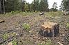 Ein Wald mit Bäumen abgeholzt | Stock Foto