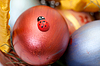 Ladybug on painted easter eggs in basket | Stock Foto