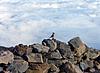 Photo 300 DPI: little bird sitting on rock