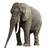 Elephant | Stock Foto