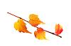 Photo 300 DPI: Fallen leaf