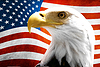 Eagle with American flag | Stock Foto