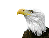 ID 3314608 | American Bald Eagle | High resolution stock photo | CLIPARTO