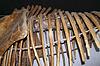 ID 3315614 | Dinosaur skeleton | Foto stockowe wysokiej rozdzielczości | KLIPARTO
