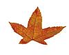 ID 3317900 | Pomarańczowy liść | Foto stockowe wysokiej rozdzielczości | KLIPARTO