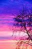 Силуэт дерева на закате | Фото