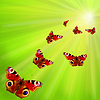 Group of butterflies flying to sun | Stock Foto