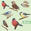 Векторный клипарт: Набор из птицы - синицы, снегири, воробей, клест