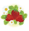 Векторный клипарт: Клубника и цветы ромашки