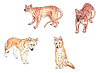Fossa i dingo | Stock Illustration