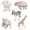 African animals | Stock Illustration