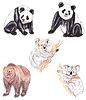 Pandy, koale i niedźwiedź brwon | Stock Illustration