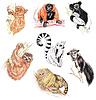 Photo 300 DPI: lemurs, tarsier, tamarin and sloth