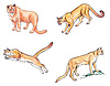 Cougars | Stock Illustration
