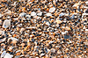 A background made of seashells | Stock Foto