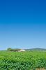 Vineyard on bright summer day | Stock Foto