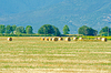 Field with rolls of hay on summer day | Stock Foto